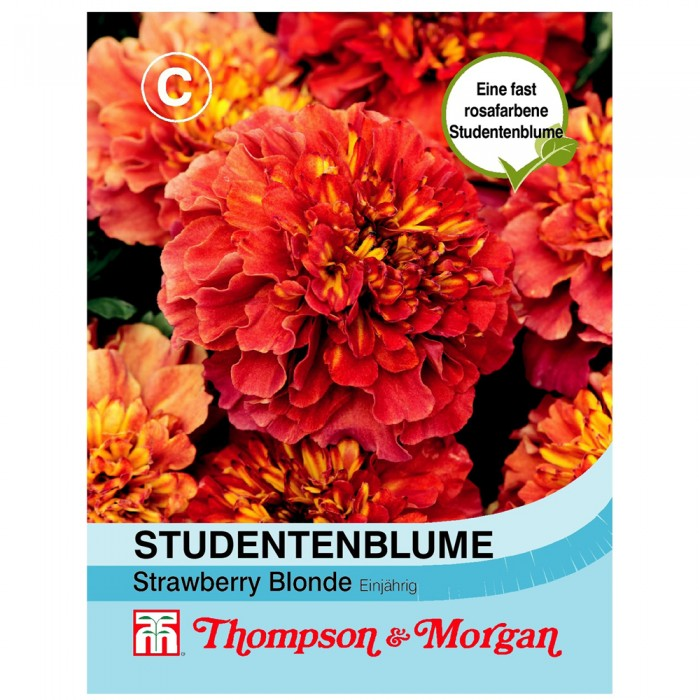 Studentenblume Strawberry Blonde