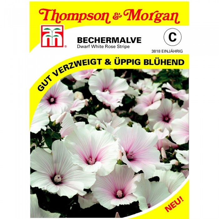 Bechermalve Dwarf White Rose Stripe (Lavatera trimestris)