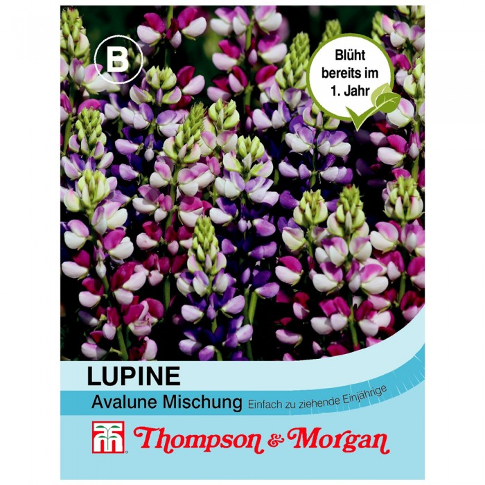 Lupine Avalune Mischung
