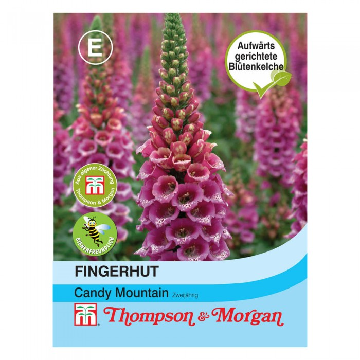 Fingerhut (Digitalis purpurea) 'Candy Mountain'