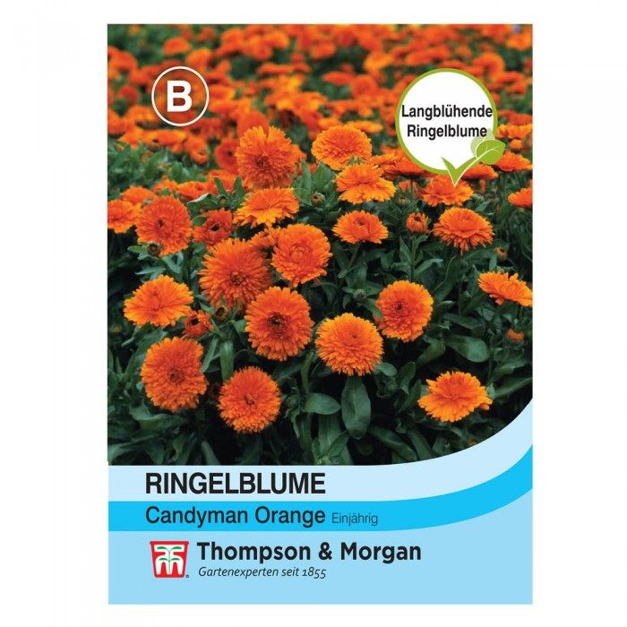 Ringelblume Candyman Orange (Calendula officinalis)