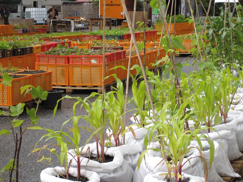 Urban Gardening Ernten Aus Der Kiste Gartenzauber