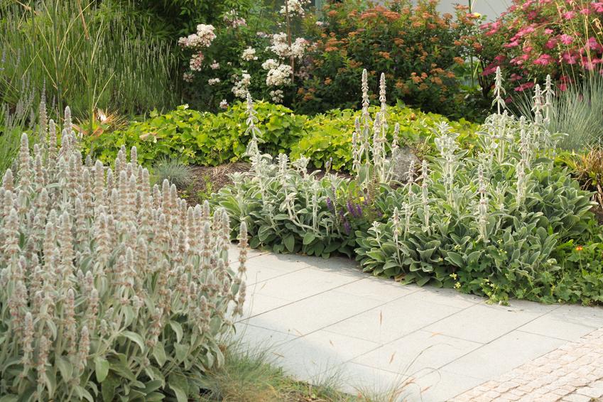 Vorgarten Der Erste Eindruck Zahlt Gartenzauber