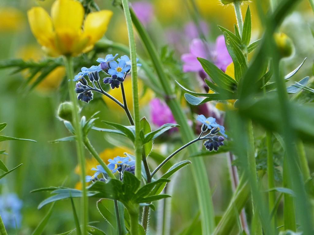 Blumenwiesen... Manche Mögen's Wild - Gartenzauber Blumenwiese Anlegen Garten