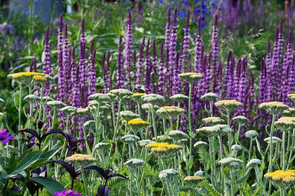 Farb- und Formkontraste im Staudenbeet - Gartenzauber