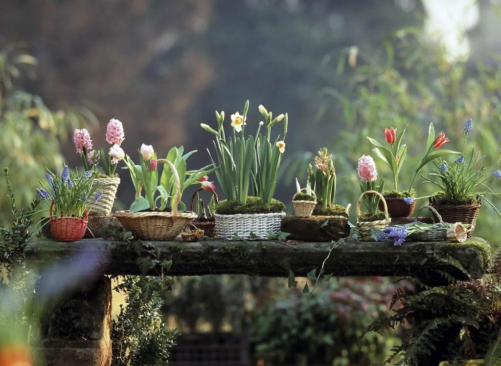 Frühling im topf   gartenzauber