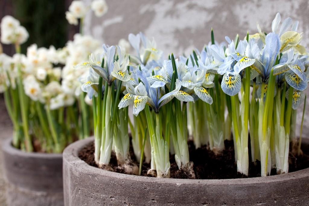 Frühling Im Topf