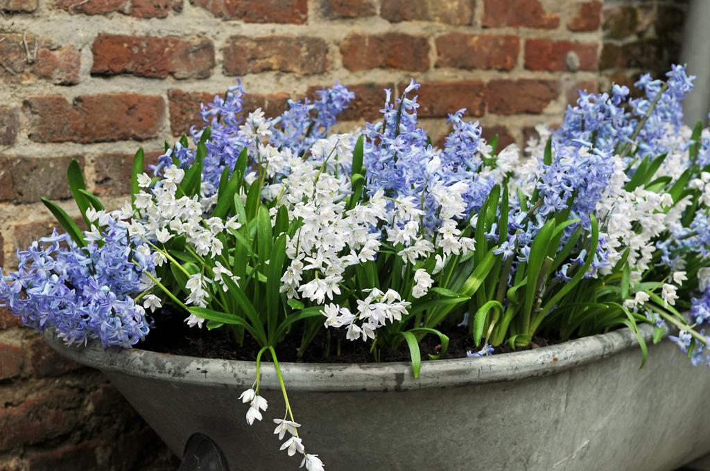Frühling Im Topf - Gartenzauber