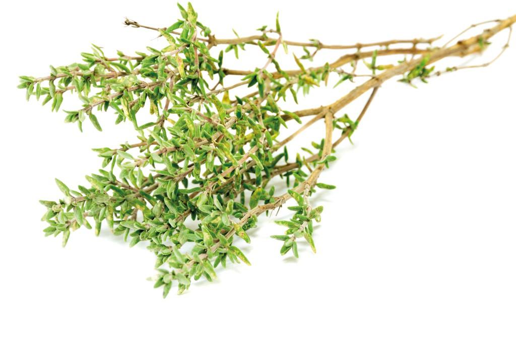 ZITRONENTHYMIAN (Thymus  citriodorus)