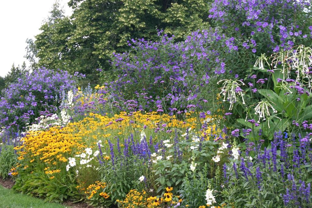 Farben Gelb Blau Und Weiß Beherrschen Das Beet Mit Gelbem Sonnenhut Rudbeckia Blauem Mehlsalbei Salvia Farinacea Den Enzianbäumen Solanum