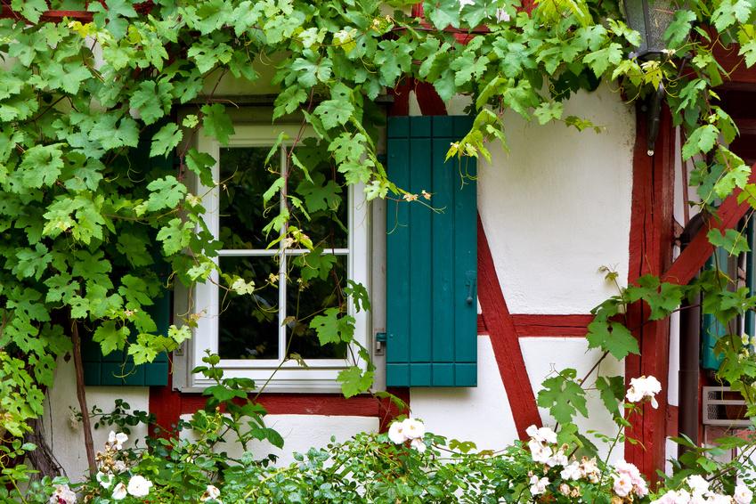 Zugewachsenes Fenster