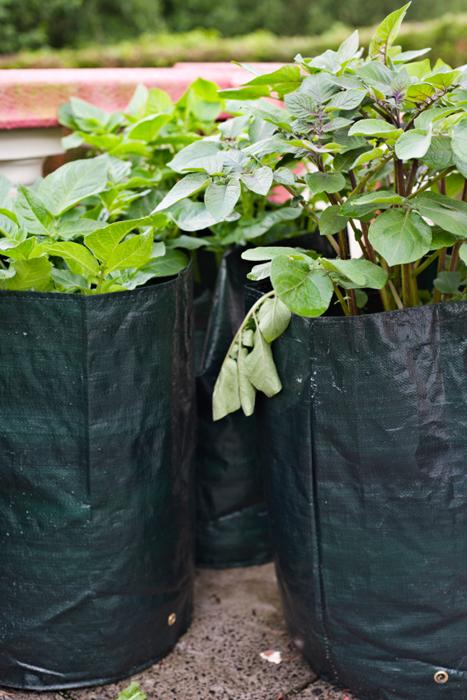 Pflanzsäcke stehen bei Stadtgärtnern hoch im Kurs.