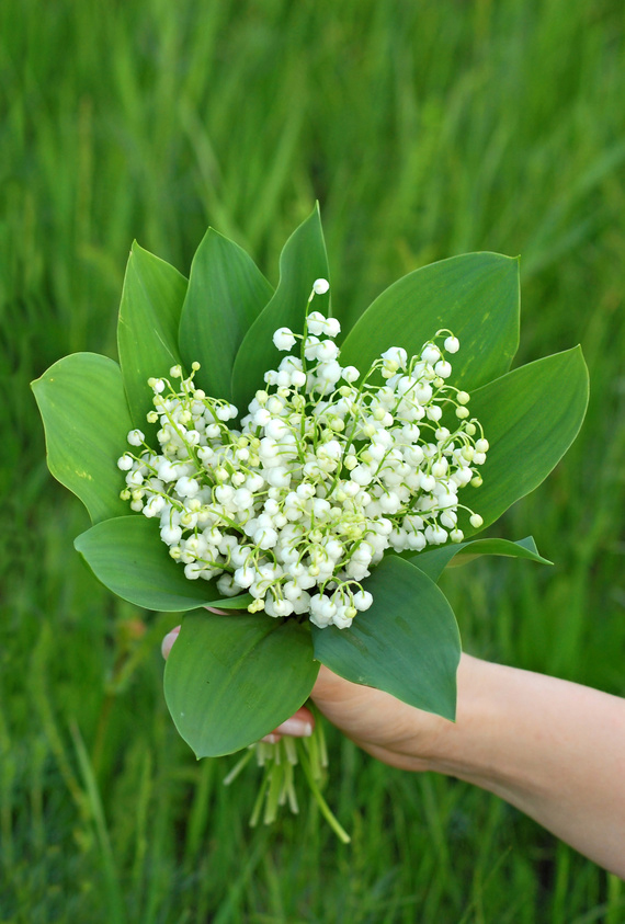Lily of the valley (convallaria majalis) in hand