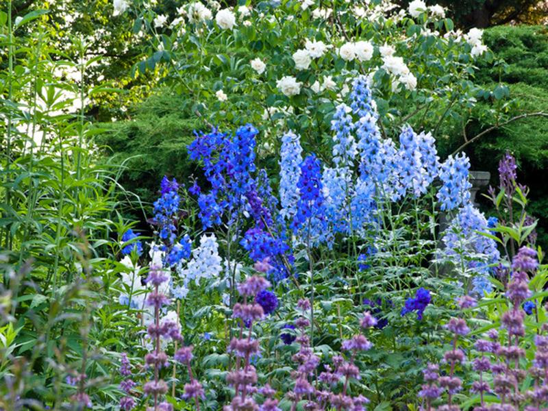 1 X 1 Der Beetgestaltung - Gartenzauber Ein Hubsches Blumenbeet Planen