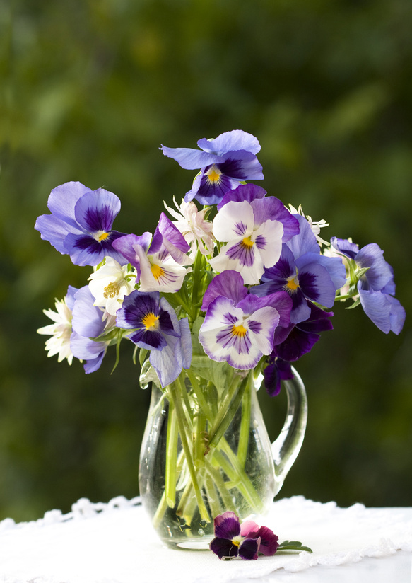 bunch of flowers pansies in a jar of