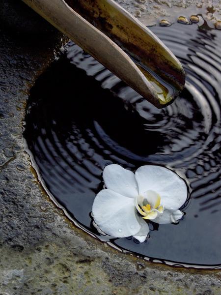 Aufsitzerpflanze, blühen, Blüte, Blume, Brunnen, Epiphyt, epiphytisch, Flora, Hochformat, Malaienblume, Orchidaceae, Orchidee, Pflanze, Phalaenopsis, Schmetterlingsorchidee, tropisch, tropische Pflanze, vertikal, Wasser, we