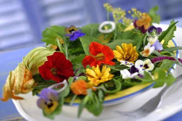 Salade de fleurs- Capucines,pensées,courgettes,soucis