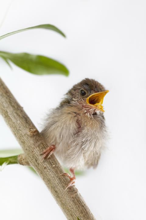 Kühles, feuchtes Wetter, das schafft auch für Gartenvögel wie ein Futterproblem, brandaktuell in der sommerlichen Aufzuchtphase ihrer Jungen.