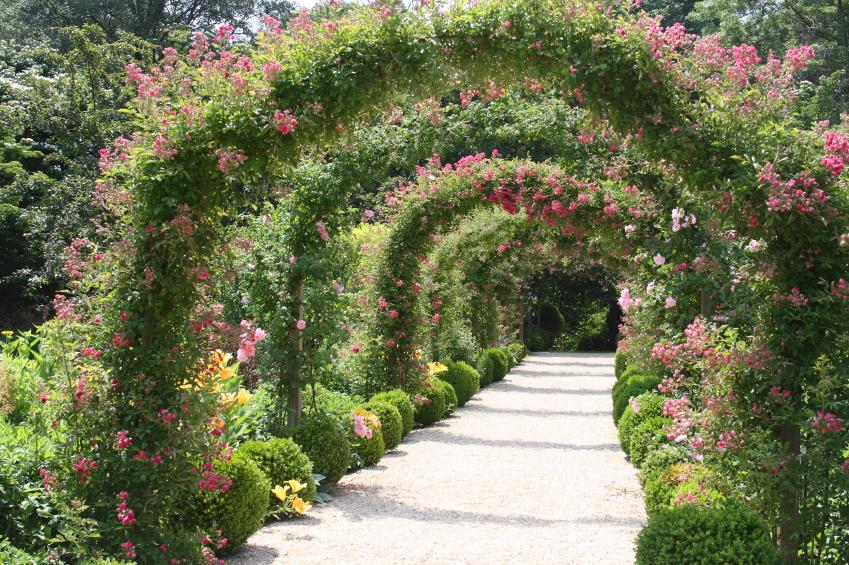 Zaun Begrünen rambler rosen - gartenzauber