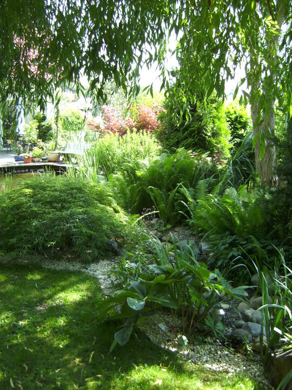 Zauberhafter schattengarten gartenzauber - Schattengarten gestalten ...