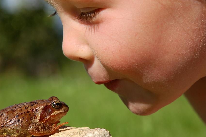 frog-kiss