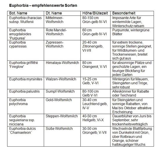 Mediendienst_Stauden_08_2012_Tabelle_Euphorbia_empfehlenswerte-Sorten