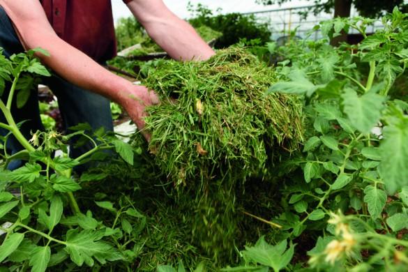 Zerkleinerte, frische, grüne Pflanzenteile sind als Bodenauflage gut geeignet.