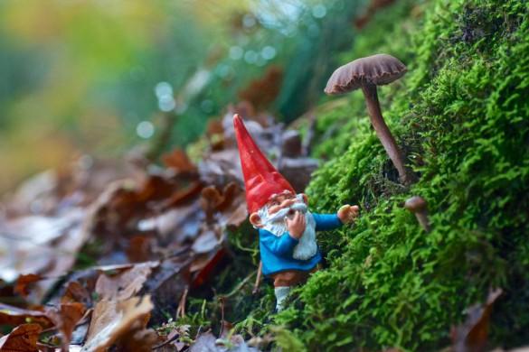 Man glaubt gar nicht, was einem im Garten alles so begegnet. Kleine Gartenwichtel sorgen an ungewöhnlichen Orten immer wieder für Aufsehen.