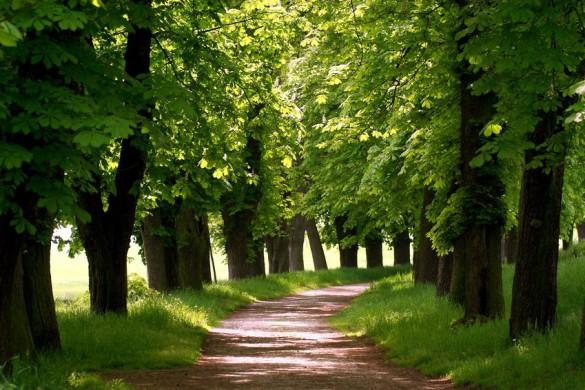 Mystische Wächter: zwischen diesen alten Baumreihen fühlt man sich wohlbehütet.
