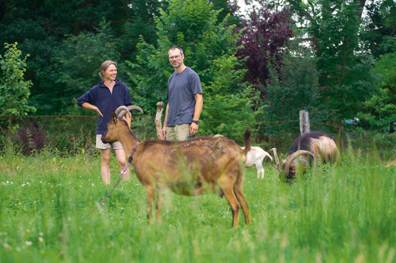 Die Ziegen liefern Milch zum Trinken und für den Käse. Nur zweimal haben Nicole und Hartmut geschlachtet. Bocklämmer verkaufen sie.