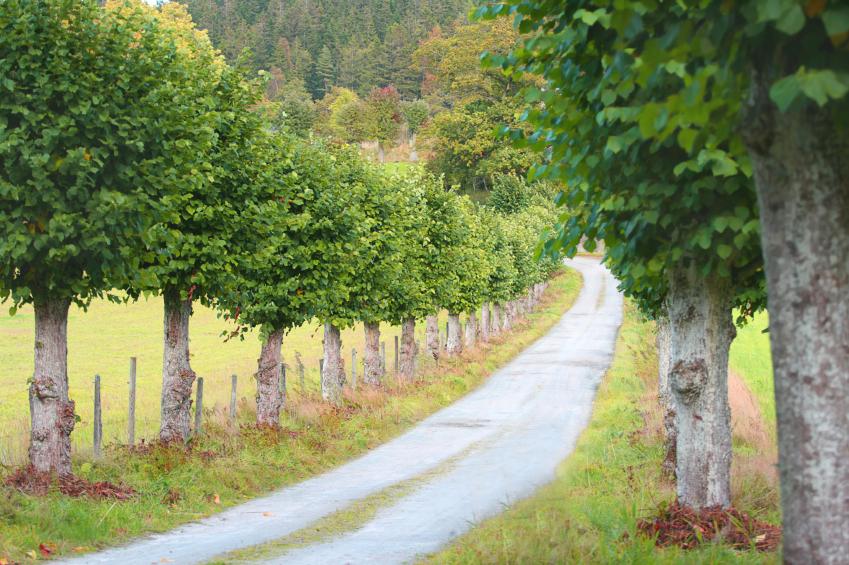 Die grünen Tunnel markierten früher oft eine Zufahrt zu einem Schloss, Gut oder Dorf.