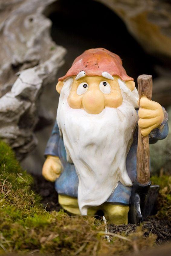 Ein langer Bart zeugt von großer Weisheit – oder nicht?