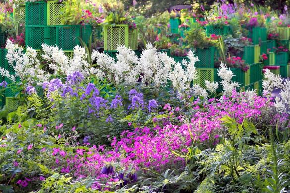 Pflanzkisten sind alles andere als langweilig. Hinter dem Schaubeet mit weißem Geißbart (Aruncus), hohen Glockenblumen und Blutstorchschnabel türmen sie sich zu interessanten Blütenlandschaften auf.