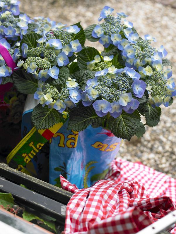 """Ganz Modern Art. Stabile Pflanzsäcke mit bunten Aufdrucken aus recyceltem Plastik sind der Renner der Gartensaison. Ein paar Löcher im Tütenboden sorgen für Wasserabzug, damit der Wurzelballen nicht dauerhaft """"nasse Füße"""" bekommt. Plastik im Retrolook steht der blauen Blume erstaunlich gut."""