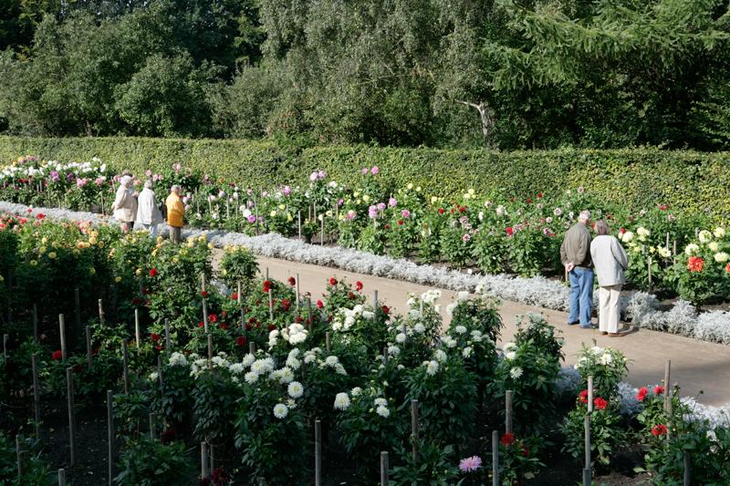 Eine schöner als die Andere – im Dahliengarten in Hamburg können über 14.000 Dahlien bewundert werden.