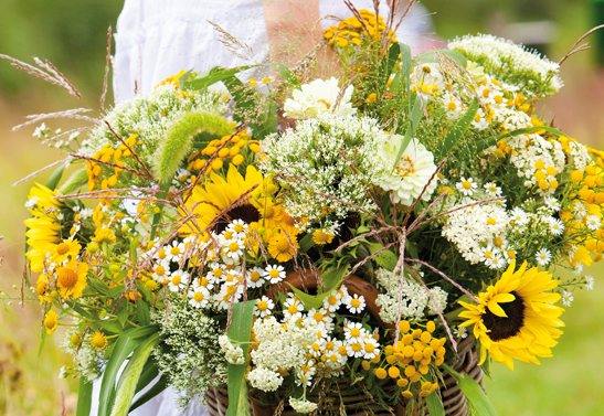 BIld 3_zonnebloem-helianthus-4-bloemenbuerauholland-547x377