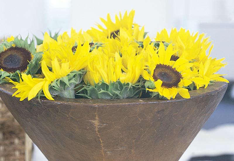 Bild 2_zonnebloem-helianthus-8-bloemenbureauholland-547x377