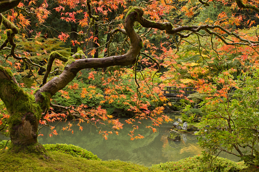 Fall Season at Japanese Garden 2