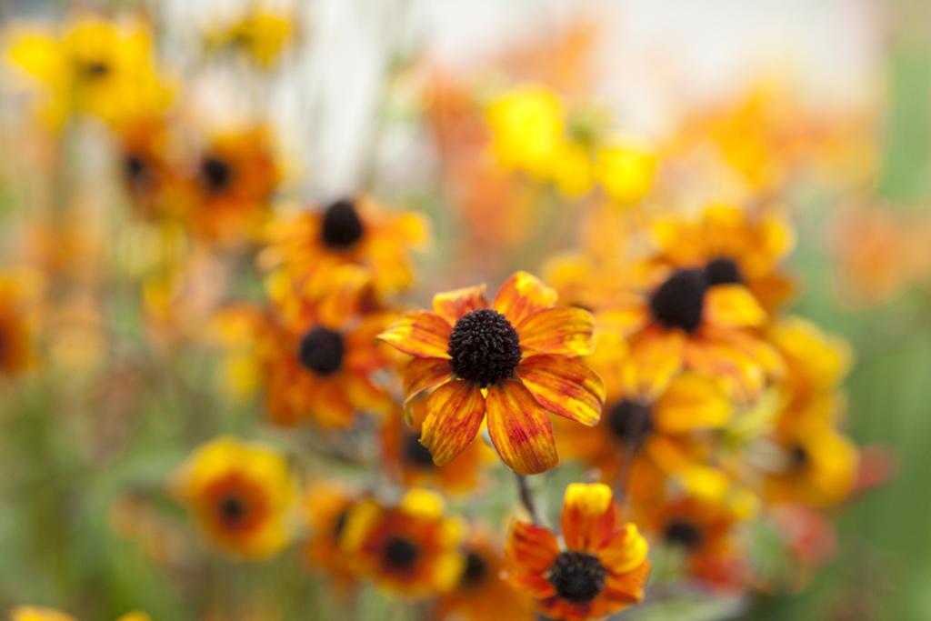 Herbst Spruche Und Gedichte Gartenzauber