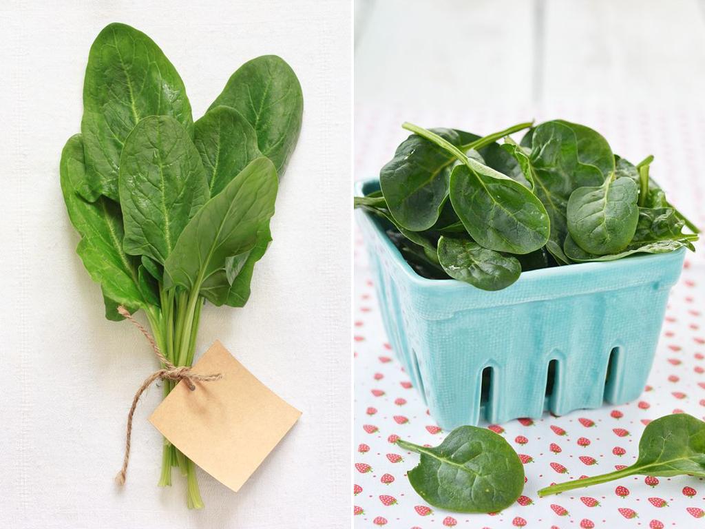 spinat spinacia oleracea gartenzauber. Black Bedroom Furniture Sets. Home Design Ideas