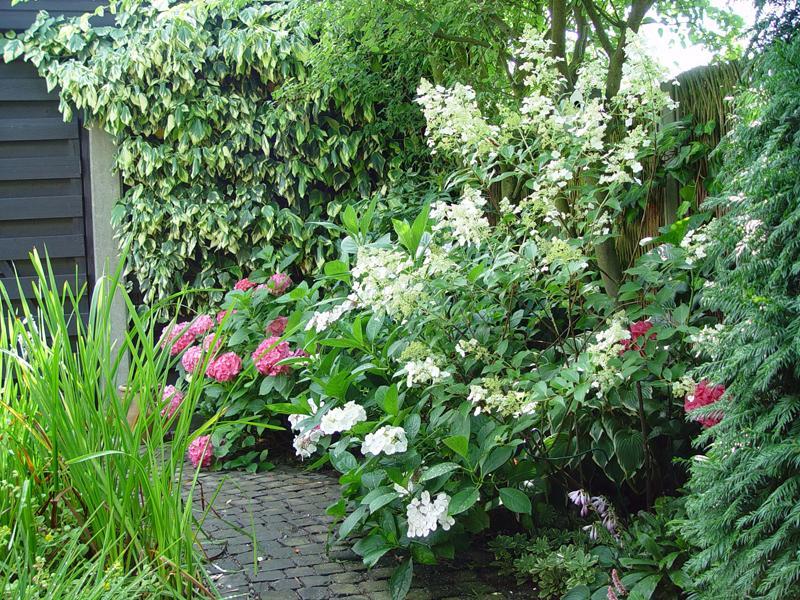 Da in einem kleinen Garten nicht so viele verschiedene Gewächse Platz finden, ist es ideal, wenn eine Pflanze gleich mehrere Zieraspekte bietet.