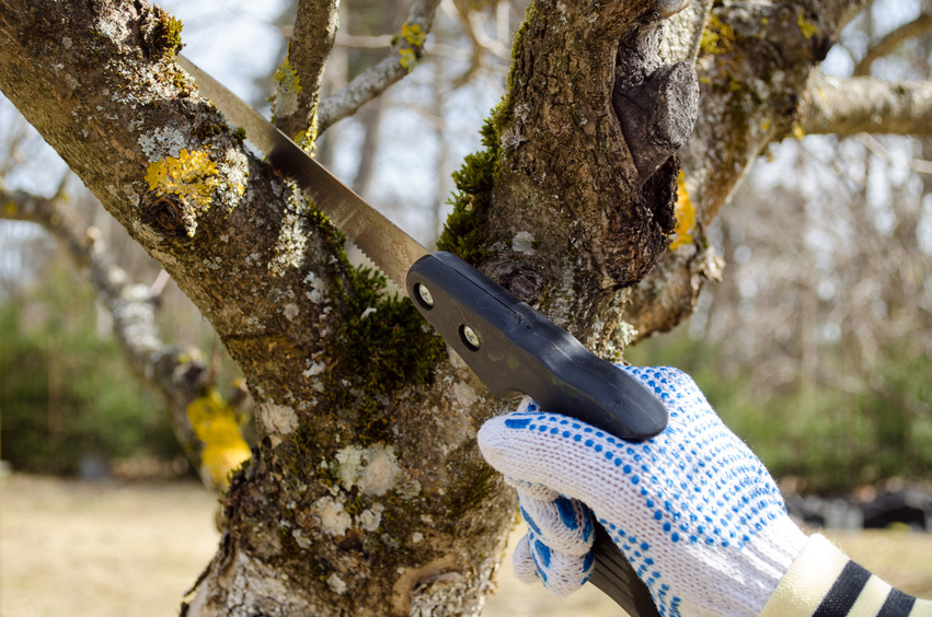 Obstbäume schneiden – ohne huthaken