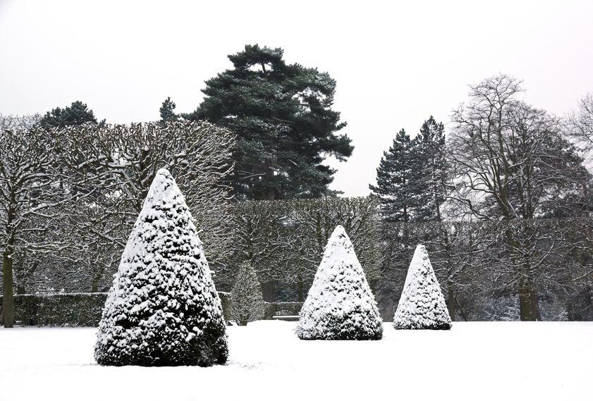 Immergrüne Pflanzen - wie z.B. diese Eiben - spielen im Winter eine herausragende Rolle im Garten.