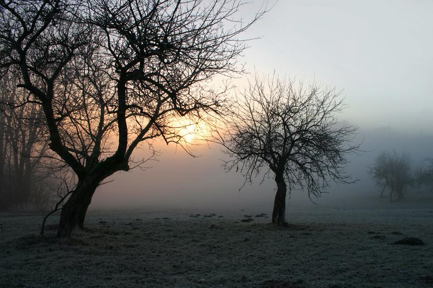 Mystischer Morgennebel im Bayerischen Wald