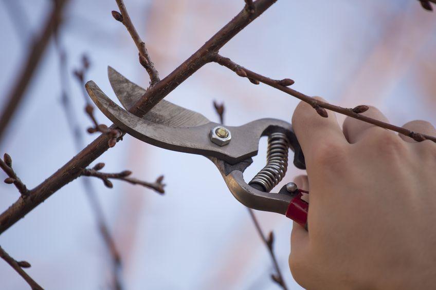 Pflaumenbäume Schneiden gartentipps im märz nutzgarten gartenzauber