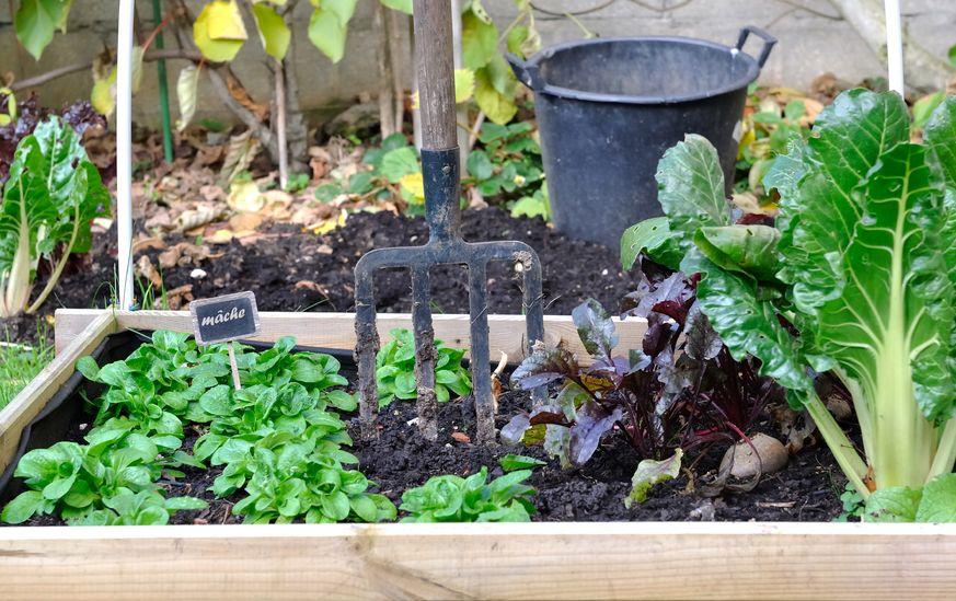 Gartnern Im Quadrat Reiche Ernte Auf Kleinstem Raum Gartenzauber