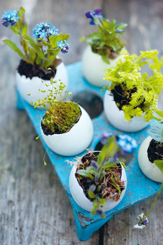 p015-CB657_eggs_S_06