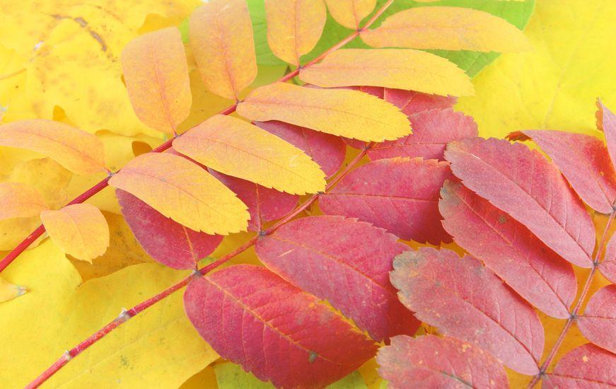 Herbstlaub - Gartenzauber