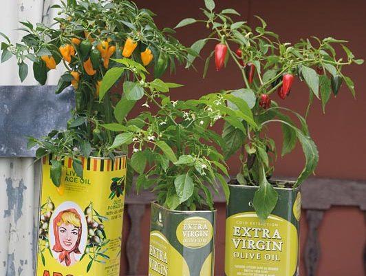 chili in olivenölkanistern
