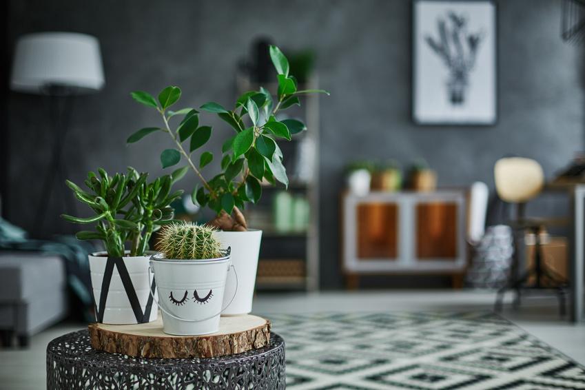 bew ssern im urlaub gartenzauber. Black Bedroom Furniture Sets. Home Design Ideas